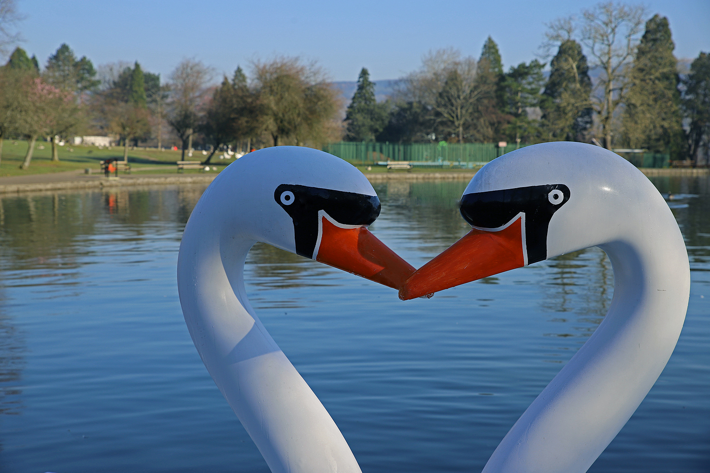 swan-boats-by-wendy-donovan