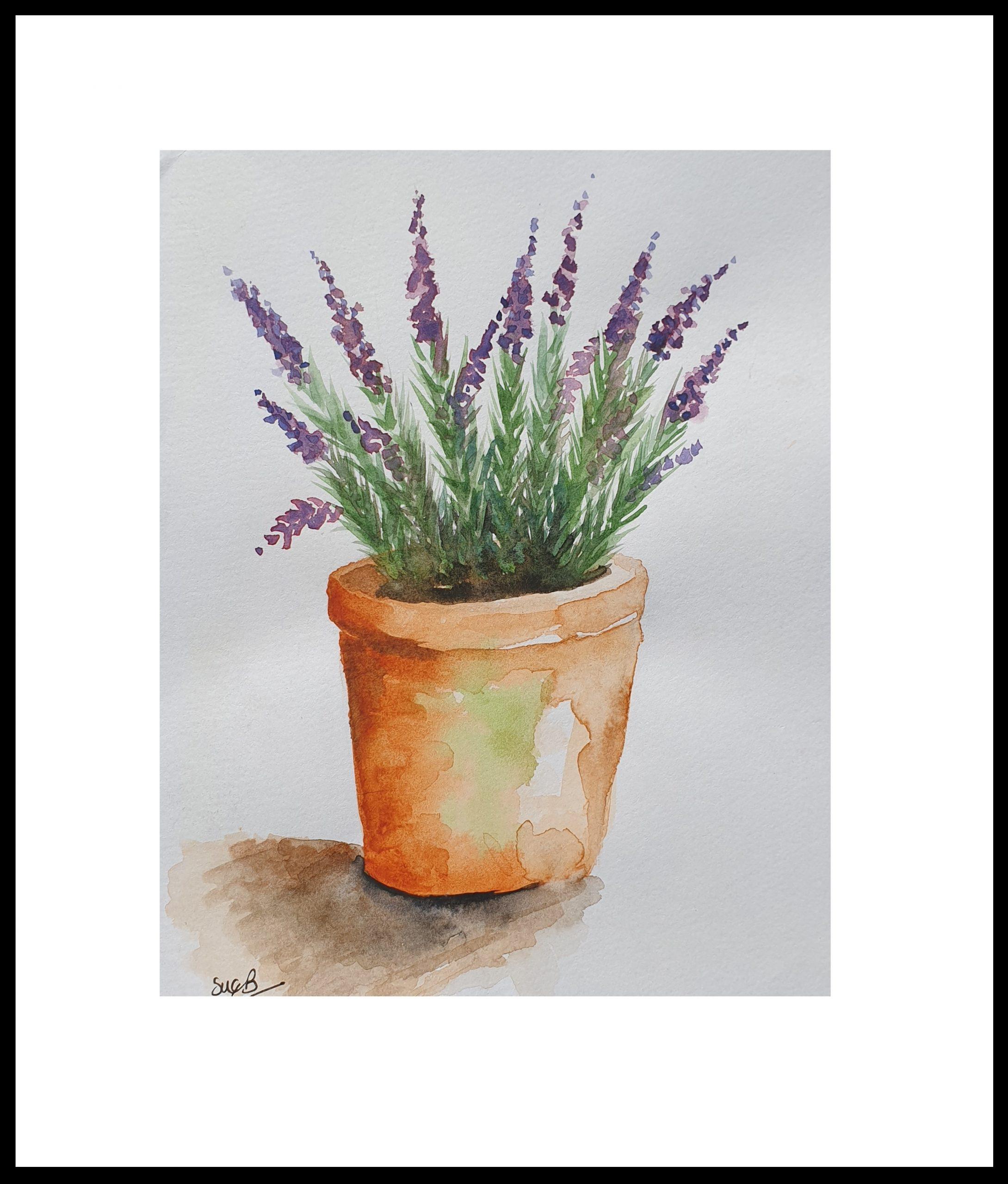 12-lavender