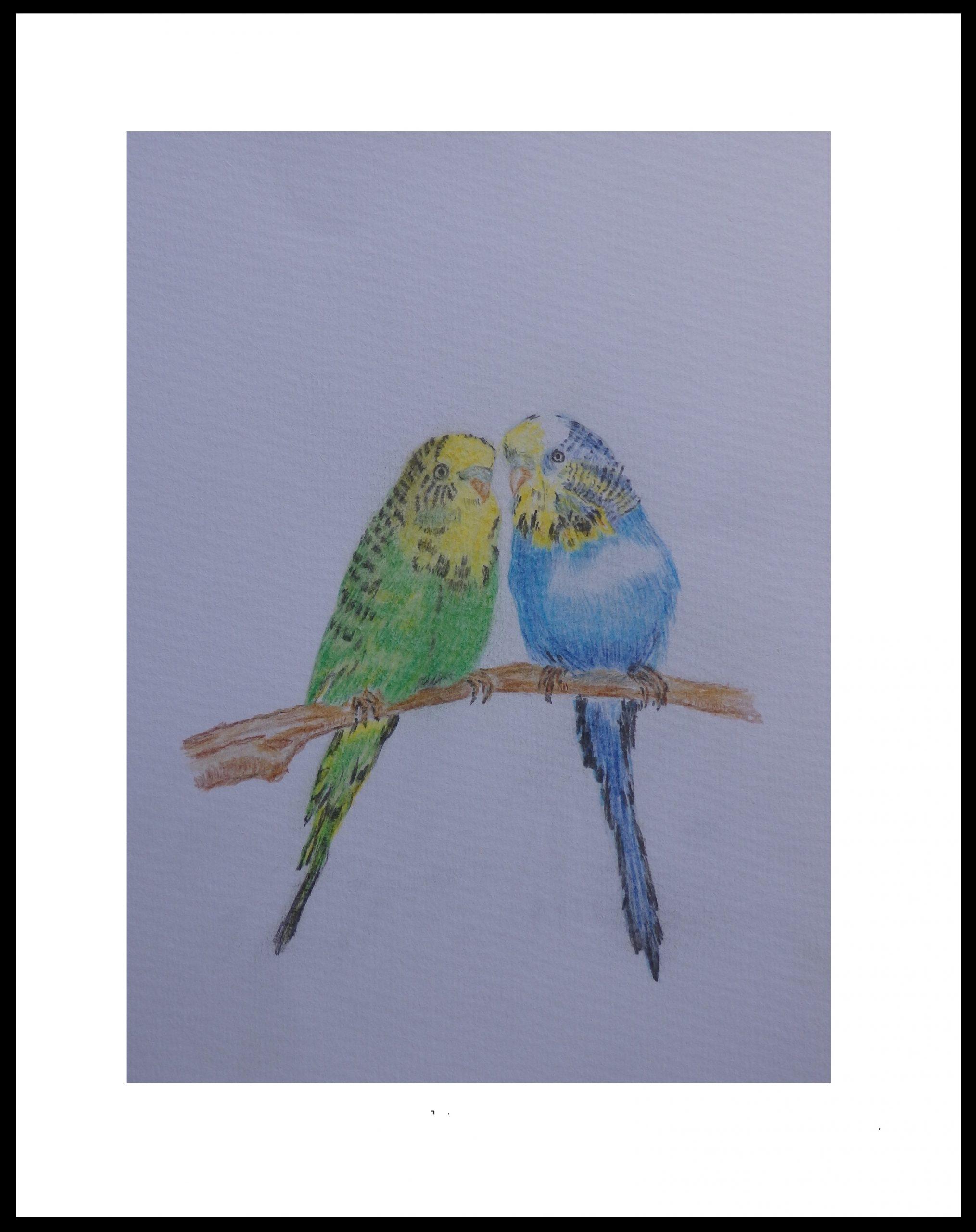 14-love-birds-