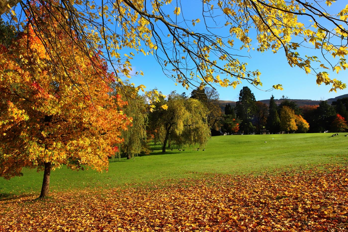 autumn-trees-by-wendy-donovan