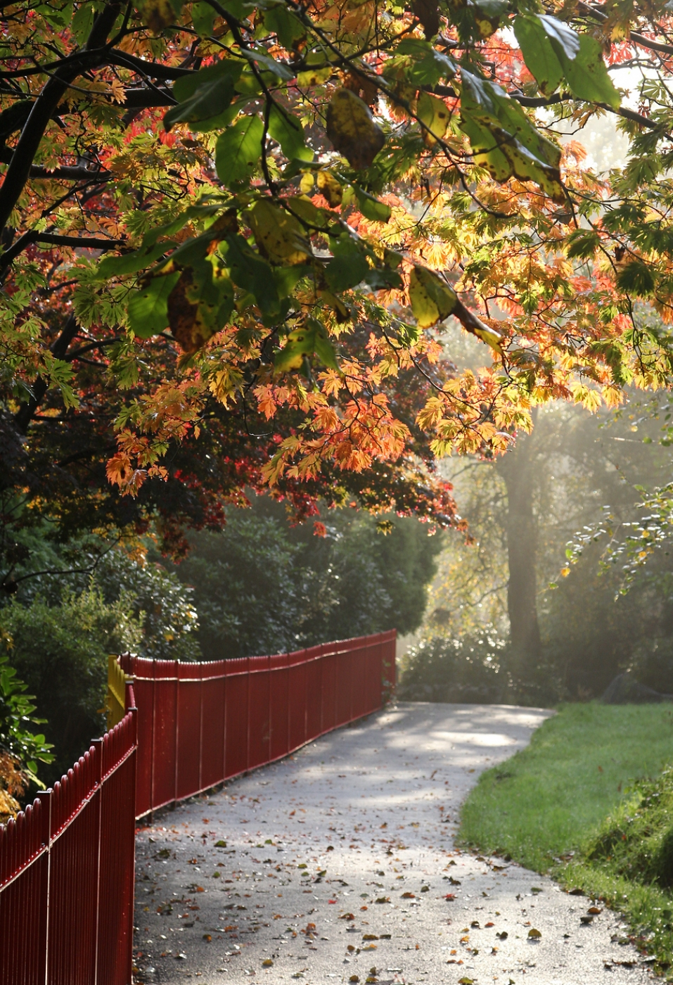 autumn-walk-by-lesley-newcombe